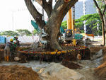 Preserving Trees at City Campus